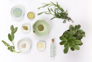いろいろな植物がテーブルの上に並べられている